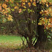 Autumn Tree 2 Art Print