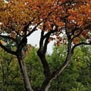 Autumn Tree II Art Print