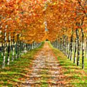 Autumn Tree Art Print by Julien Fourniol/Baloulumix