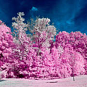 Autumn Trees In Infrared Art Print