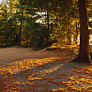 Autumn Trees Near Lake Art Print