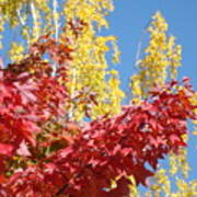 Autumn Trees Red Yellow Fall Tree Blue Sky Landsape Art Print