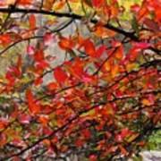 Autumn Trees Rock City Art Print