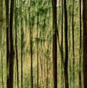 Autumn Trees, Scottish Borders Art Print