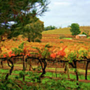 Autumn Vines Art Print