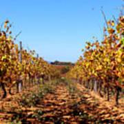 Autumn Vines Print by K McCoy