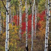 Autumn Warm Art Print