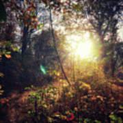 Autumn Woodland Art Print
