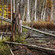 Autumn Woodland Marsh Scene Art Print