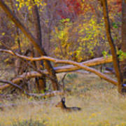 Autumn Yearling Art Print