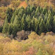 Autumn2 Art Print