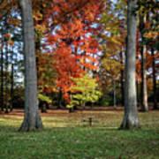 Autumnal Framework Art Print