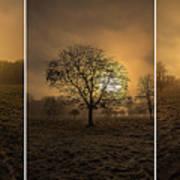 Autumnal Triptych. Art Print
