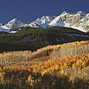 Autumnal View Of Aspen Trees And The Art Print