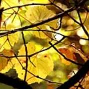 Autumn's Revelry Art Print