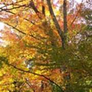 Autumn's Gold - Photograph Art Print