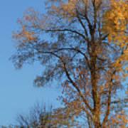 Autumn's Gold  - No 2 Art Print