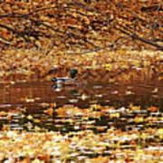 Autumns Mallards Art Print