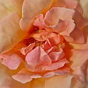 Autumns Rose Art Print