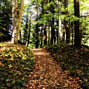 Autumn's Trail Art Print