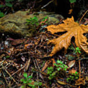 Autumn's Treasure Art Print
