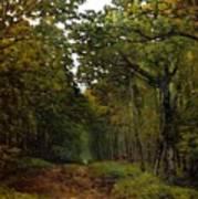 Avenue Of Chestnut Trees Art Print