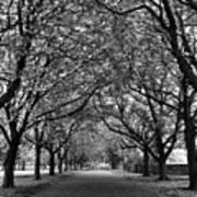 Avenue Of Trees Monochrome Art Print