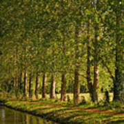 Avenue Of Trees On The Kennet And Avon Canal Art Print