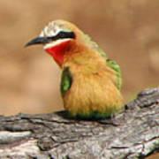 Avian Jewel Art Print