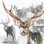 Axis Deer Art Print
