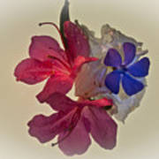 Azalea Bouquet Majic Art Print