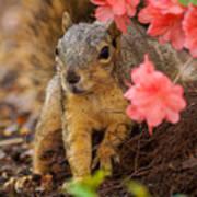 Azalea Squirrel Art Print