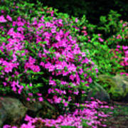 Azalea Waterfall At The Azalea Festival Art Print