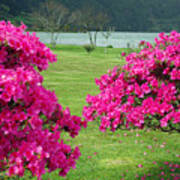 Azaleas At The Azores Art Print