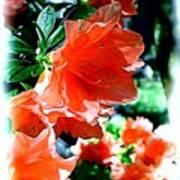 Azaleas In The Spring Art Print