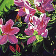 Azaleas With Dew Drop Art Print