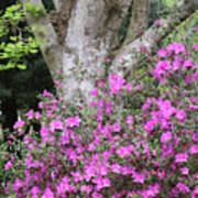 Azaleas With Tree Art Print