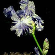 Babbling Brook Iris  Art Print