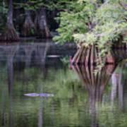 Babcock Wilderness Ranch - Peaceful Alligator Lake Art Print