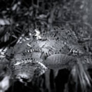 Baby Alligators On Board Art Print
