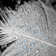 Baby Blue Dew Drops On Feather Art Print