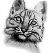 Baby Bobcat Art Print