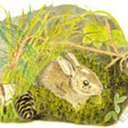 Baby Bunny Down For The Night Art Print