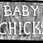 Baby Chicks Bw Art Print