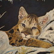 Baby Cougar In Snow Art Print