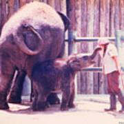 Baby Elephant At Zoo 1988 Art Print