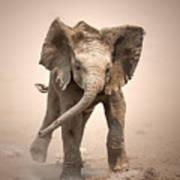 Baby Elephant Mock Charging Art Print