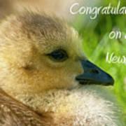Baby Goose Card Art Print