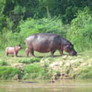 Baby Hippo 1 Art Print
