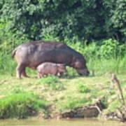 Baby Hippo 2 Art Print